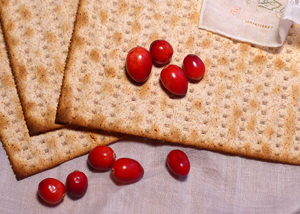 Matzah_Cranberries_Thanksgiving